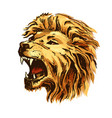 sketch color lion head vector image vector image