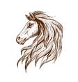 Sketch profile of arabian horse head vector image