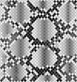 Skin of snake vector image vector image