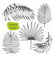 tropical plants set of with vector image vector image