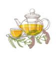 yarrow tea vector image vector image