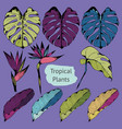 colorful tropical plants set of vector image vector image