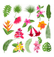 exotic tropical flowers and leaves vector image vector image