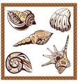 Set decorative ornamental ethnic of seashells on a vector image vector image