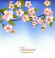 spring background a blossoming tree branch vector image vector image