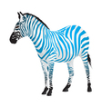 Zebra with strips of blue color vector image vector image