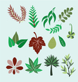 Collection of set different colorful leaves vector image