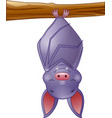 cute bat cartoon sleeping hanging on tree vector image