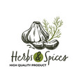 herbs and spices high quality products shop logo vector image