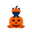 kitty play hide and seek in a halloween pumpkin vector image vector image