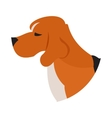 Pedigree dog head beagle vector image vector image