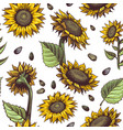 sunflowers seamless pattern beautiful botanical vector image vector image