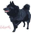 color sketch black dog schipperke breed vector image vector image