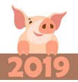 pig 2019 new year flat vector image