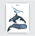 card with whale hand drawn vector image vector image
