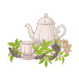 elderberry tea vector image vector image