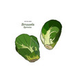hand drawn set of brussels sprouts vector image