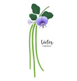 long beans fresh with leaves and flower design vector image vector image