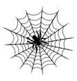 tarantula on cobweb isolated vector image vector image