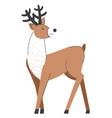 reindeer with big horns deer woodland animals vector image vector image