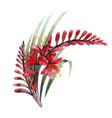 watercolor crocosmia bouquet vector image vector image