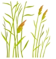 Reed isolated on white background vector image