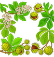 chestnut branches frame on white background vector image vector image