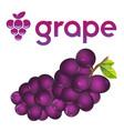 fruit grape white background image vector image