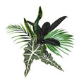 Tropical palm leaves jungle leaf dark ficus plan