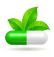 organic capsule with green leaves on white vector image