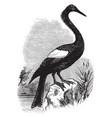 anhinga snakebird american darter vintage vector image vector image