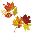 autumn leaves composition white background vector image vector image