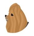 Pedigree dog head yorkshire terrier vector image