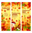 autumn sale banner set fall leaf and pumpkin vector image vector image