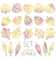 Collection colourful autumn leaves isolated vector image vector image