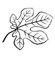 fig leaf black pictogram vector image vector image