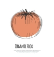 Hand drawn tomato over white background vector image vector image
