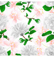 seamless texture three white flowers camellia vector image vector image