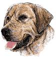 Labrador Retriever vector image vector image