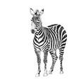 striped zebra african safari animal sketch vector image vector image