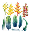 watercolor heliconia collection vector image vector image