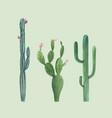 beautiful three watercolor cactus hand vector image vector image