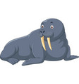 cartoon walrus isolated on white background vector image vector image