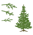Fir tree and Branches vector image
