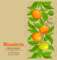 mandarin plant pattern on color background vector image vector image
