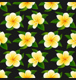 beautiful tropical flowers seamless floral summer