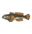gofish color sketch vector image vector image
