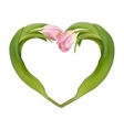 Heart from two tulips EPS 10 vector image