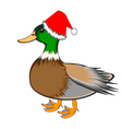 A Christmas duck isolated on a white backgrou vector image vector image