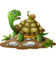 cartoon turtles and snails cute white background vector image